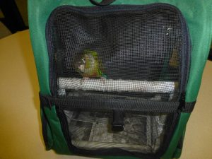 DIY parrot carrier