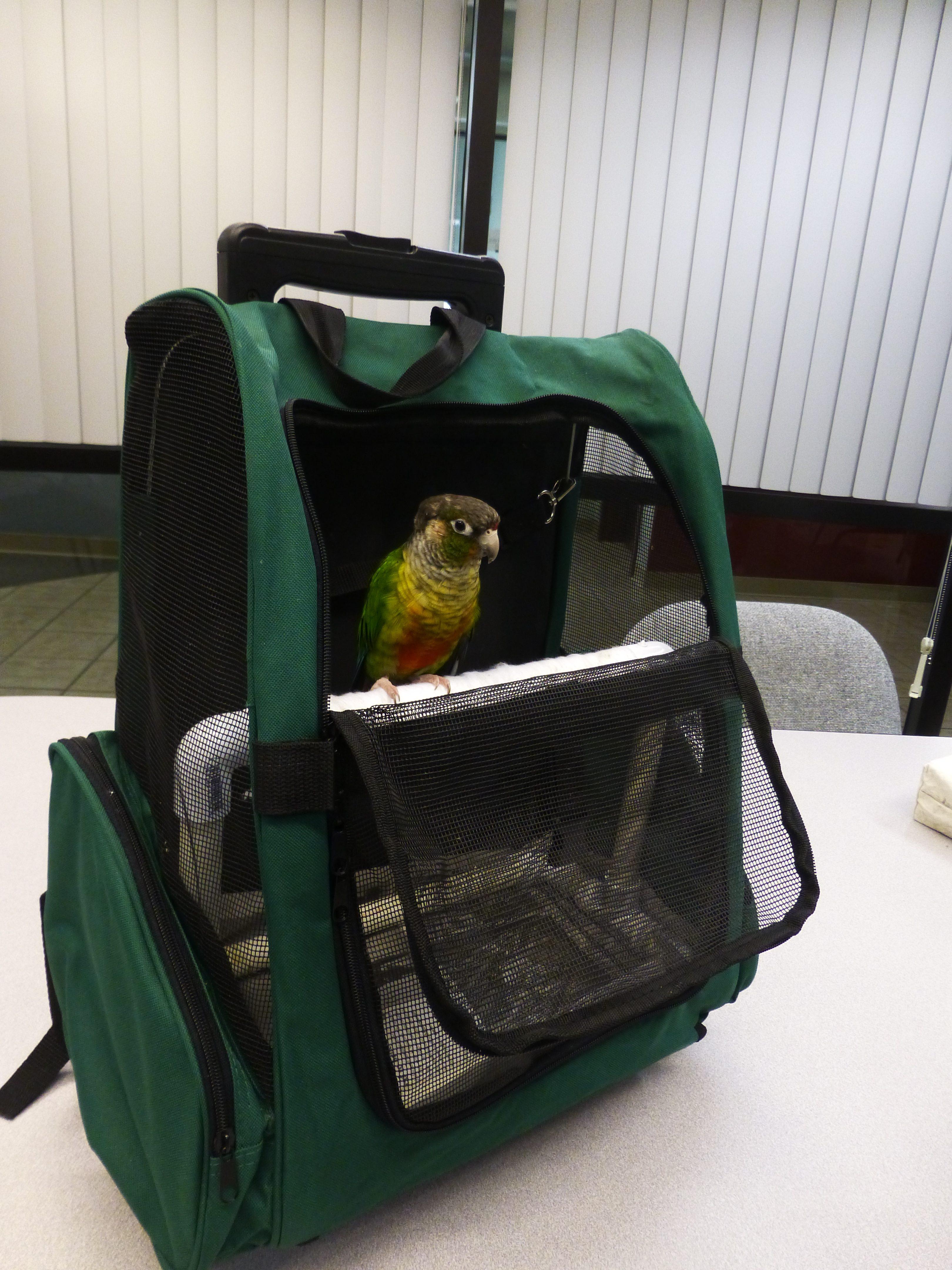 Homemade parrot backpack