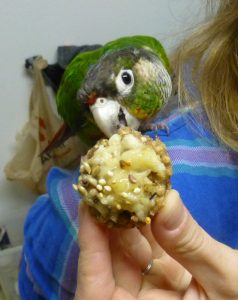 Birthday Cake for a Conure Zach Szablewski