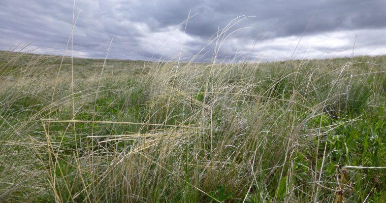 Blue Mountains Part II: Zumwalt Prairie
