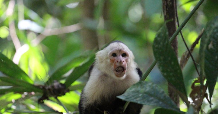 Costa Rica Part I: Carara National Park