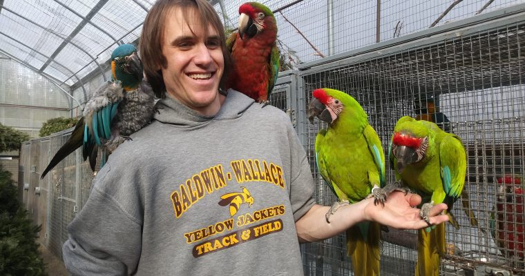 Flying Colors Aviary