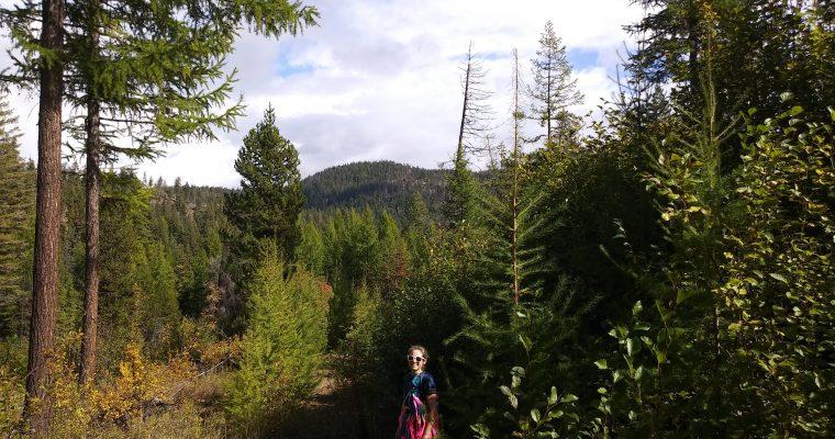 Whistler Canyon 10 and 50 Miler Course Setup