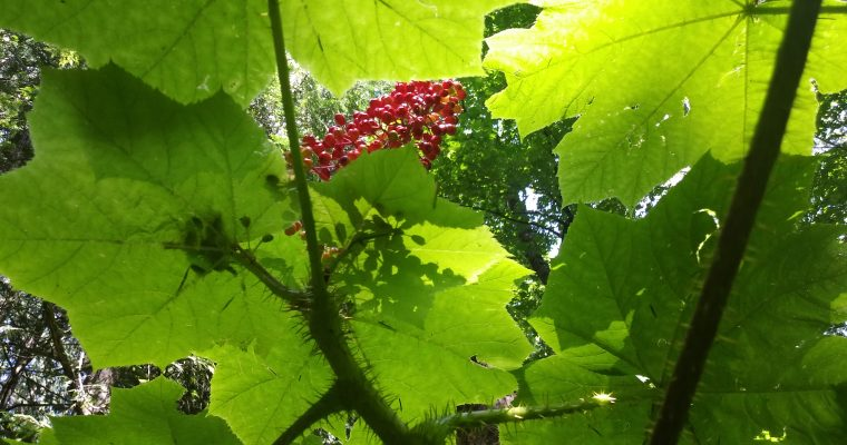 Favorite Plants of the Issy Alps