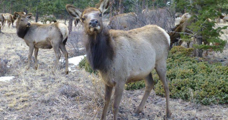 The Deer Family: Cervidae