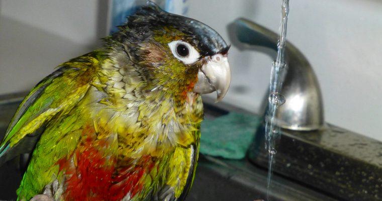Parakeet Ponderings