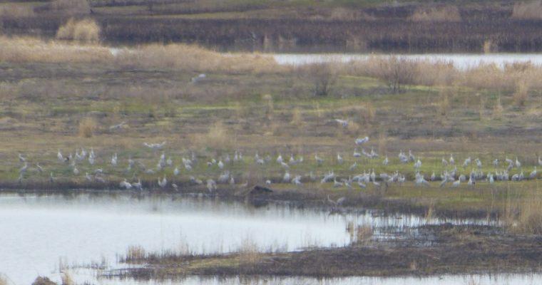 Columbia NWR Birding