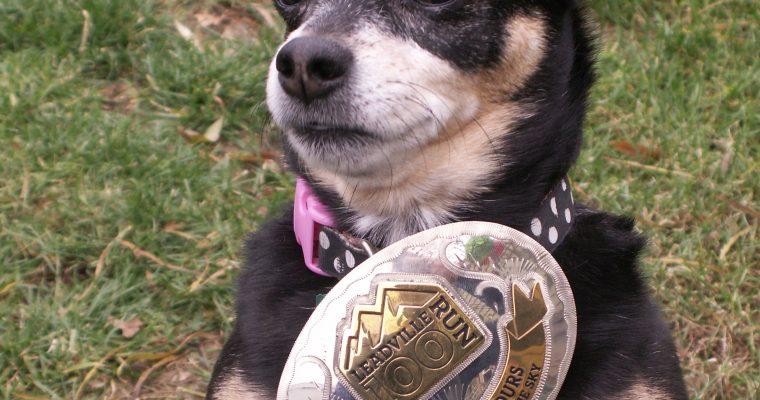 Sybil the Chihuahua