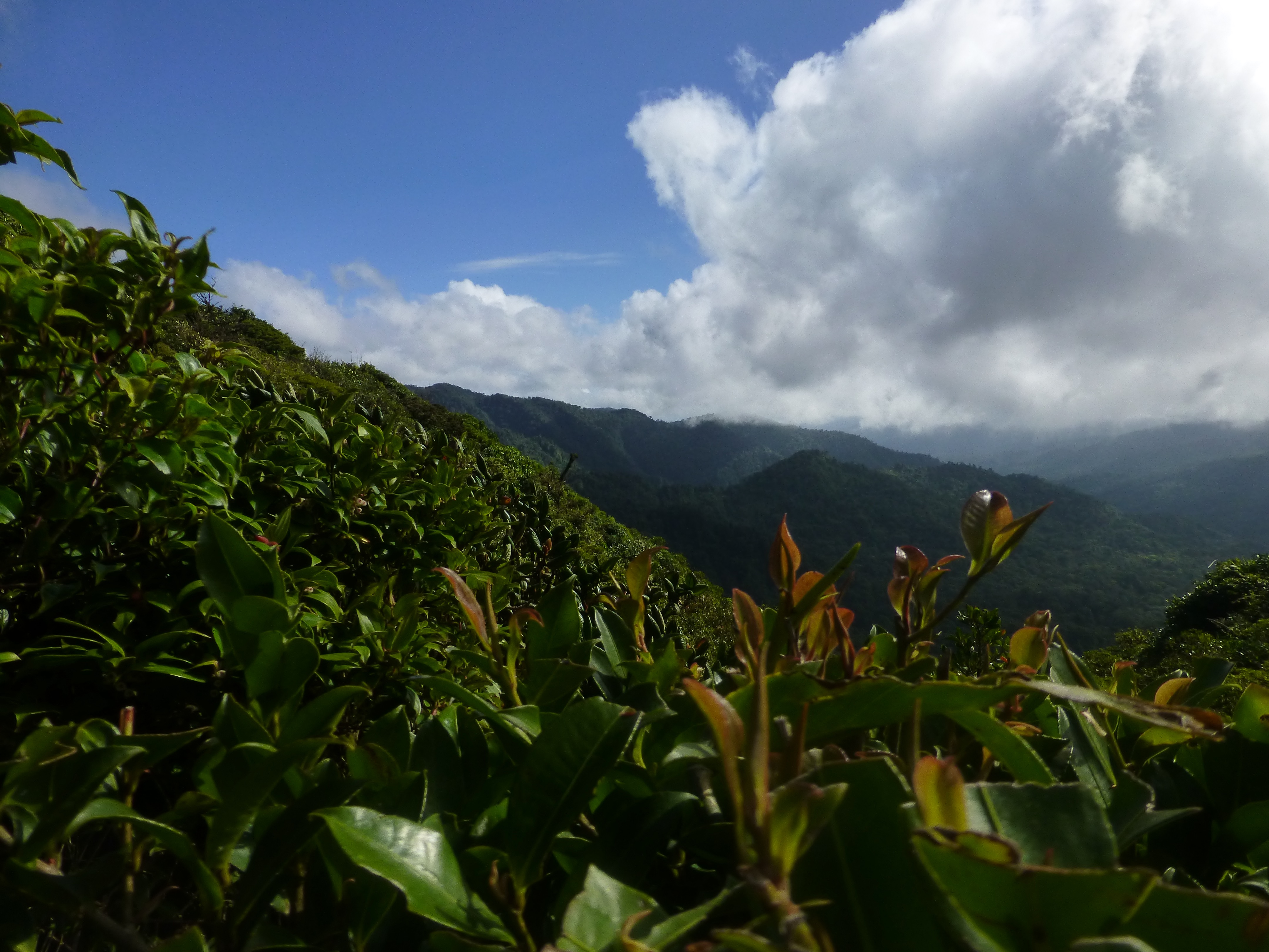 Costa Rica Part II : Monteverde and Curi-Cancha Cloud Forest Reserves