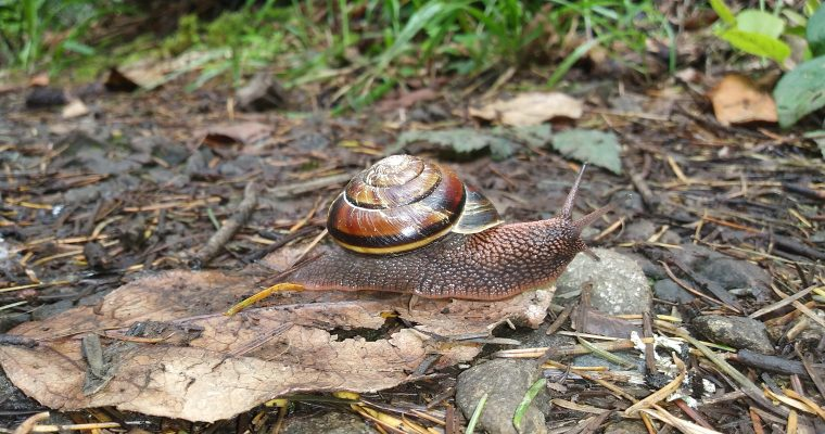 Trampled Underfoot: Snails of the Issy Alps Part II