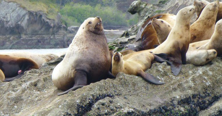 Mammals of Washington State
